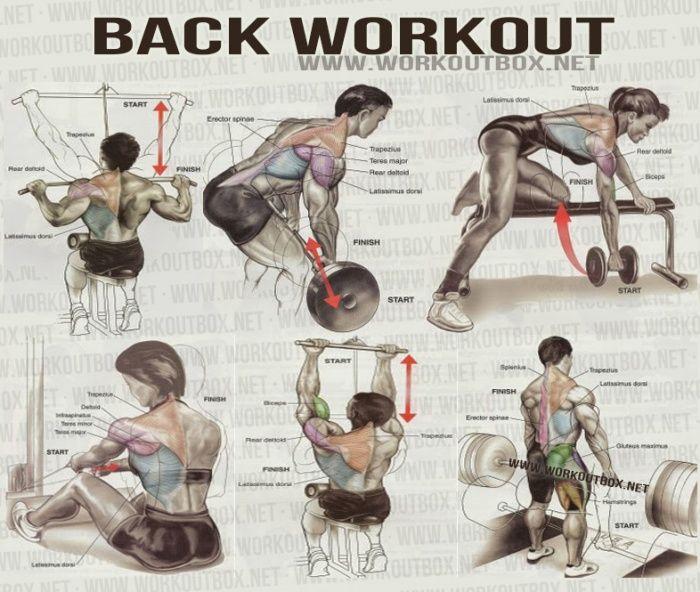 Back workout healthy fitness shoulder delta