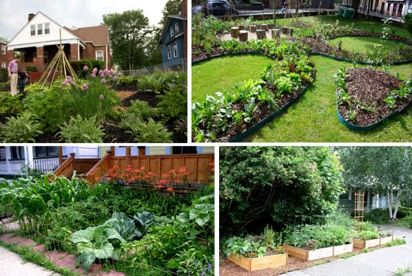 front yard veggies artful veggie gardens - Front Yard Vegetable Garden Ideas