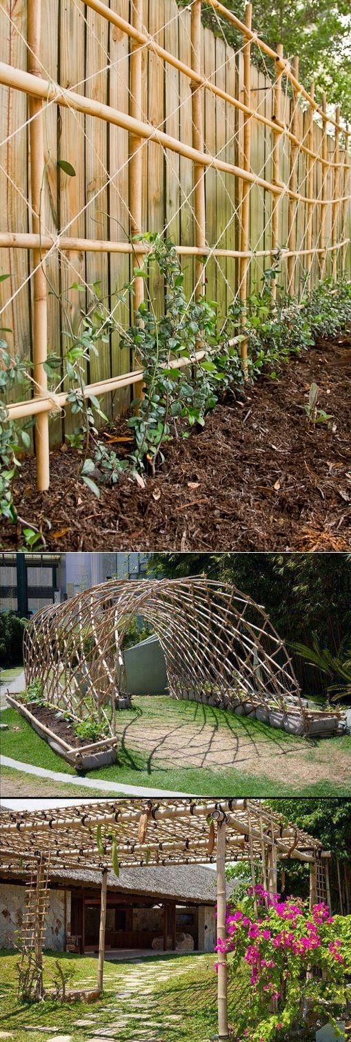 Bamboo for climbing plants i 39 m thinking of using for Climbing flowering plants for fences