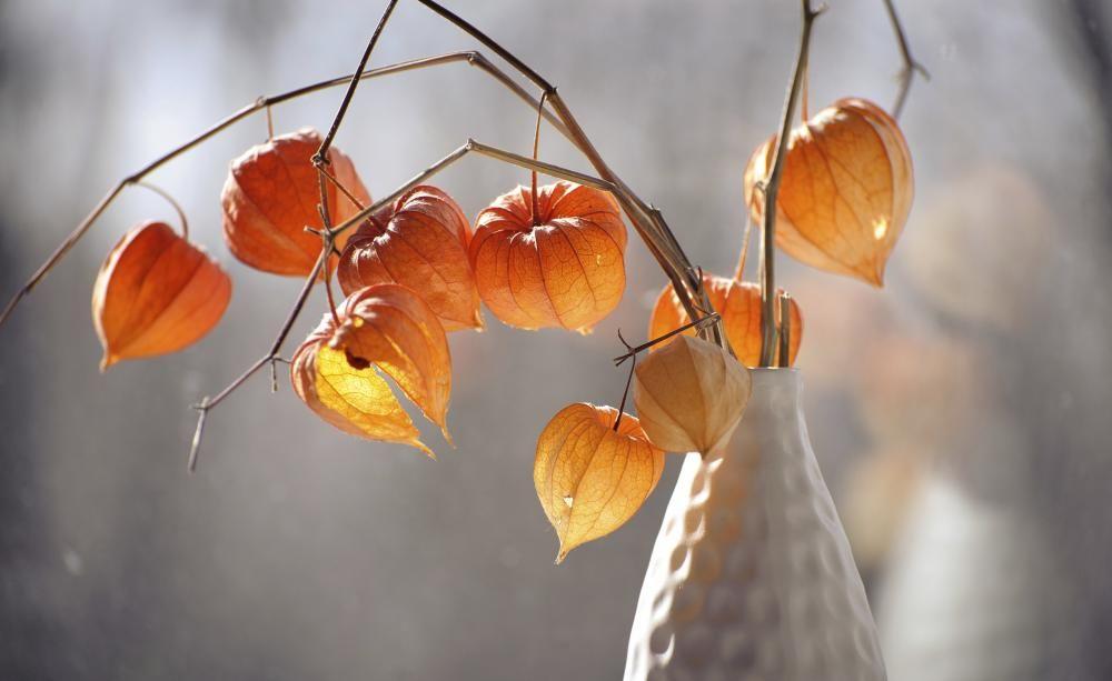 trockenblumen konservieren sie die farben der saison dekoration pinterest blumen. Black Bedroom Furniture Sets. Home Design Ideas