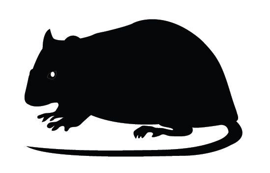 Rat Silhouette Rat Silhouette Silhouette Vector Animal Silhouette