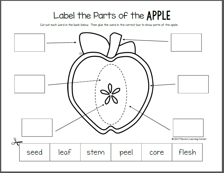 Apple Life Cycle Worksheets Apple Life Cycle Life Cycles Kindergarten Apple Lessons
