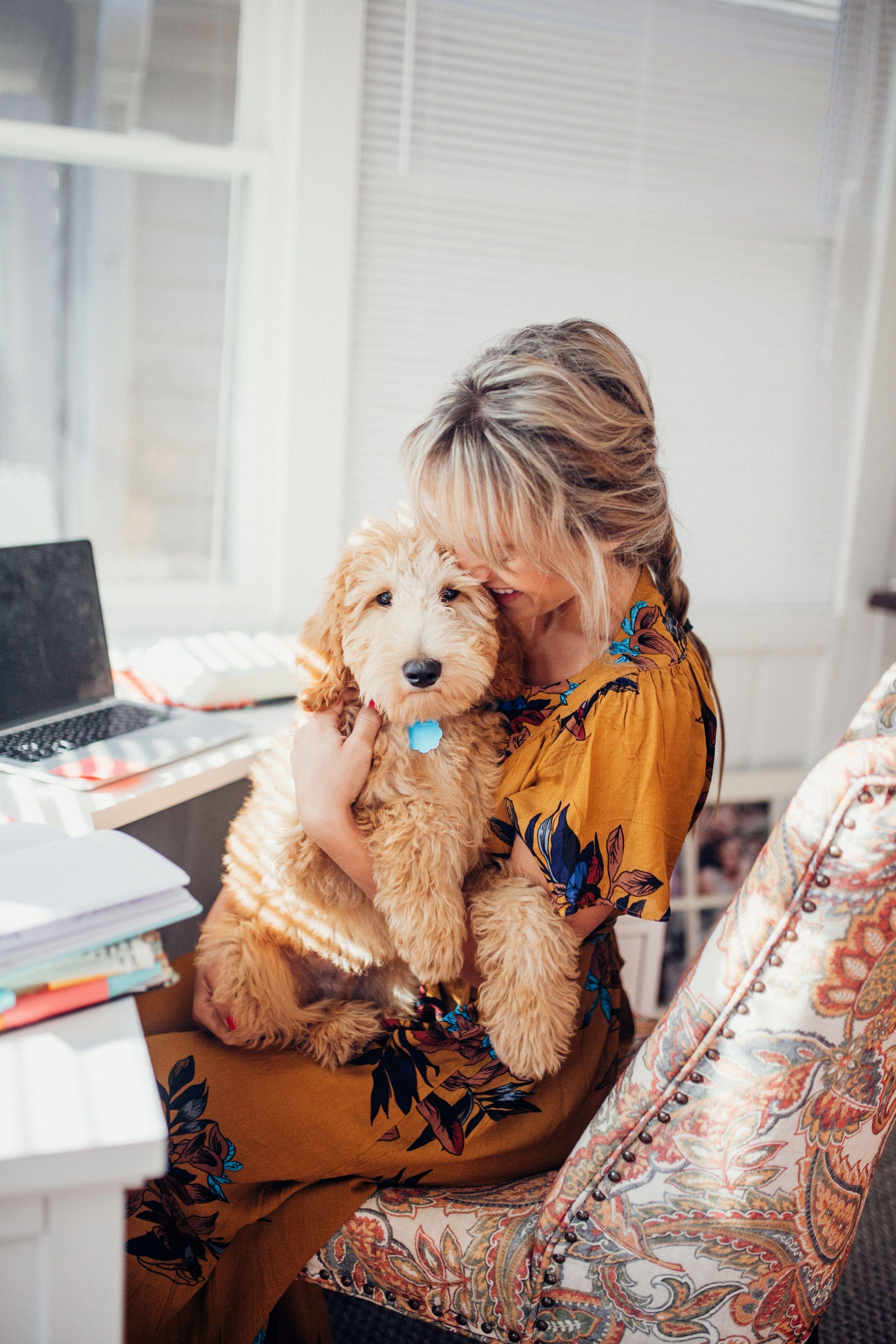 Golden Doodle Puppy Goldendoodle, Goldendoodle puppy