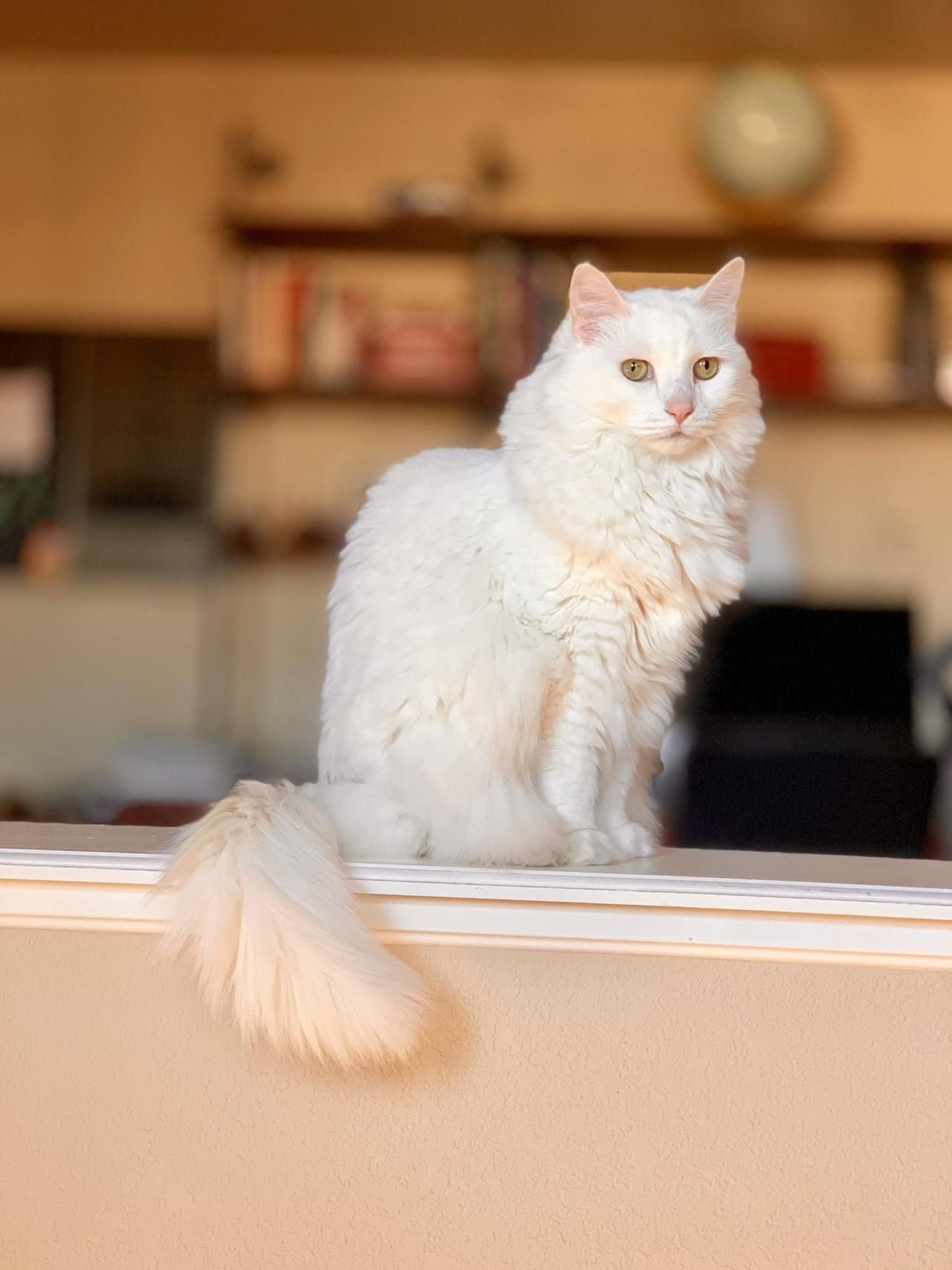Cute Flat Faced Cat Cat Pictures For Kids Beautiful Cats Pictures Cats