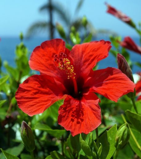 Red Hibiscus Flower Love Them Hibiscus Wall Art Pictures Photo Canvas