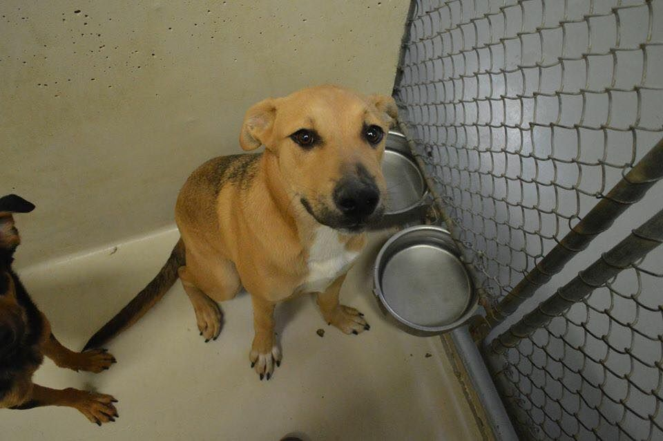 12 30 15 Odessa Tx Urgent Speaking Up For Those Who Can T 12 Hrs