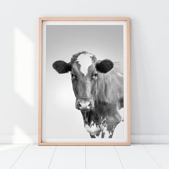 Photo of Cow Downloadable Prints Farm Animals Photography Black and White Modern Minimalist Poster Peekaboo Nursery Decor Wall Art Digital Printable