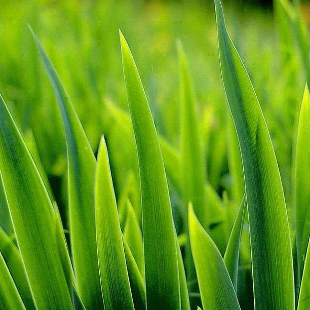 Very close to the grass... | Muy cerca de la hierba...