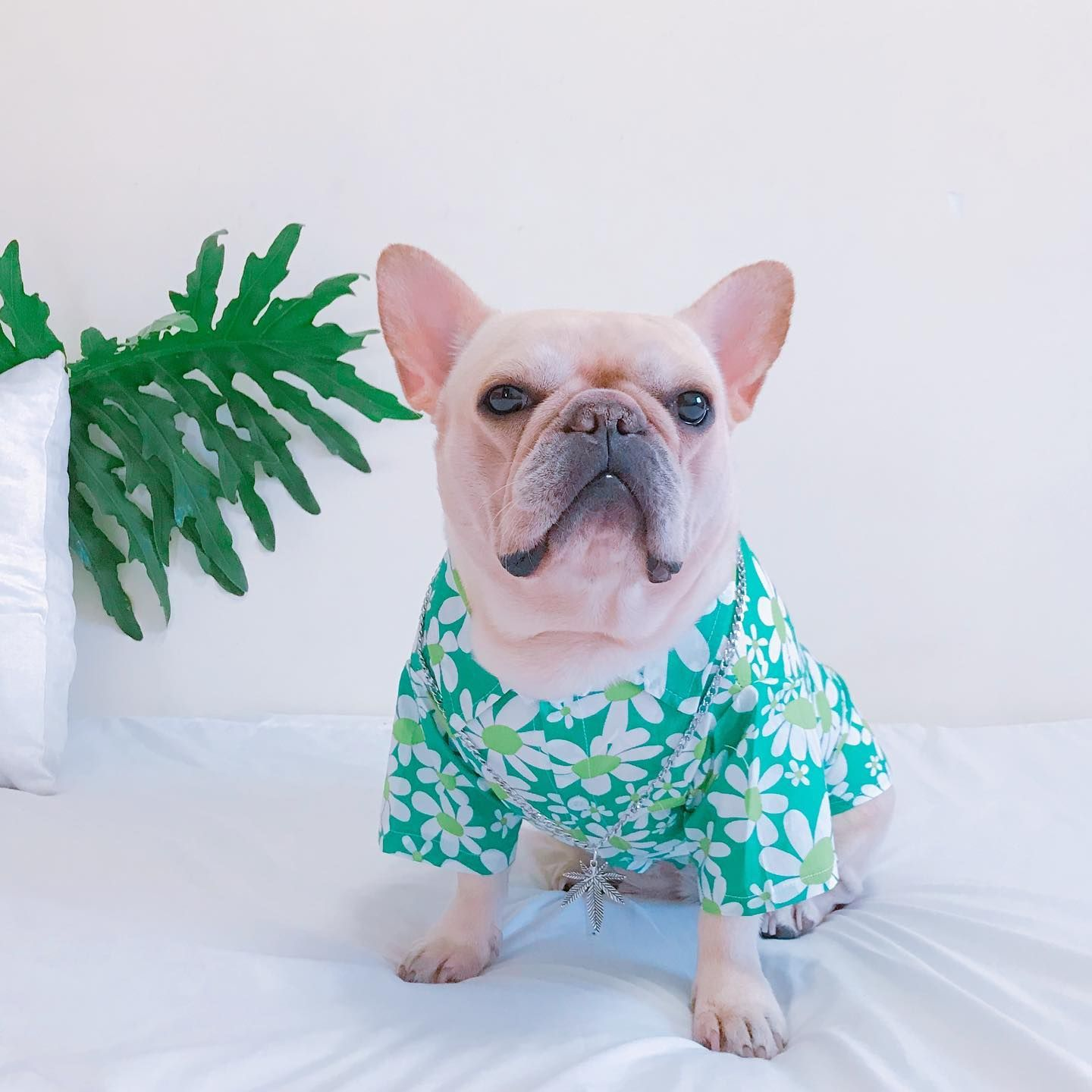 Pin On Frenchiely French Bulldog Clothes Outfits