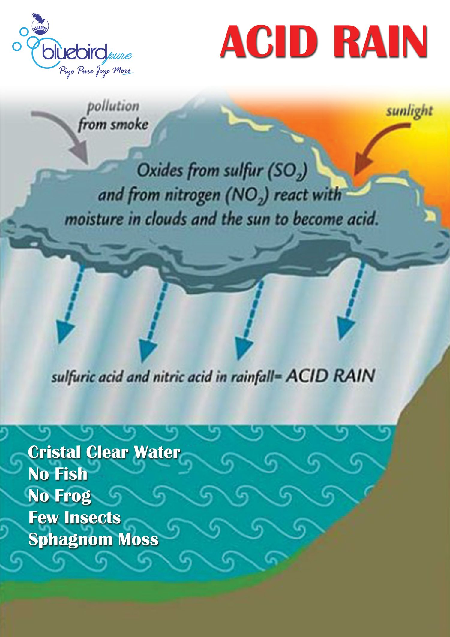 small resolution of industrial pollution can lower the ph of precipitation creating acid rain this type of precipitation can directly kill some organisms like trees and fish