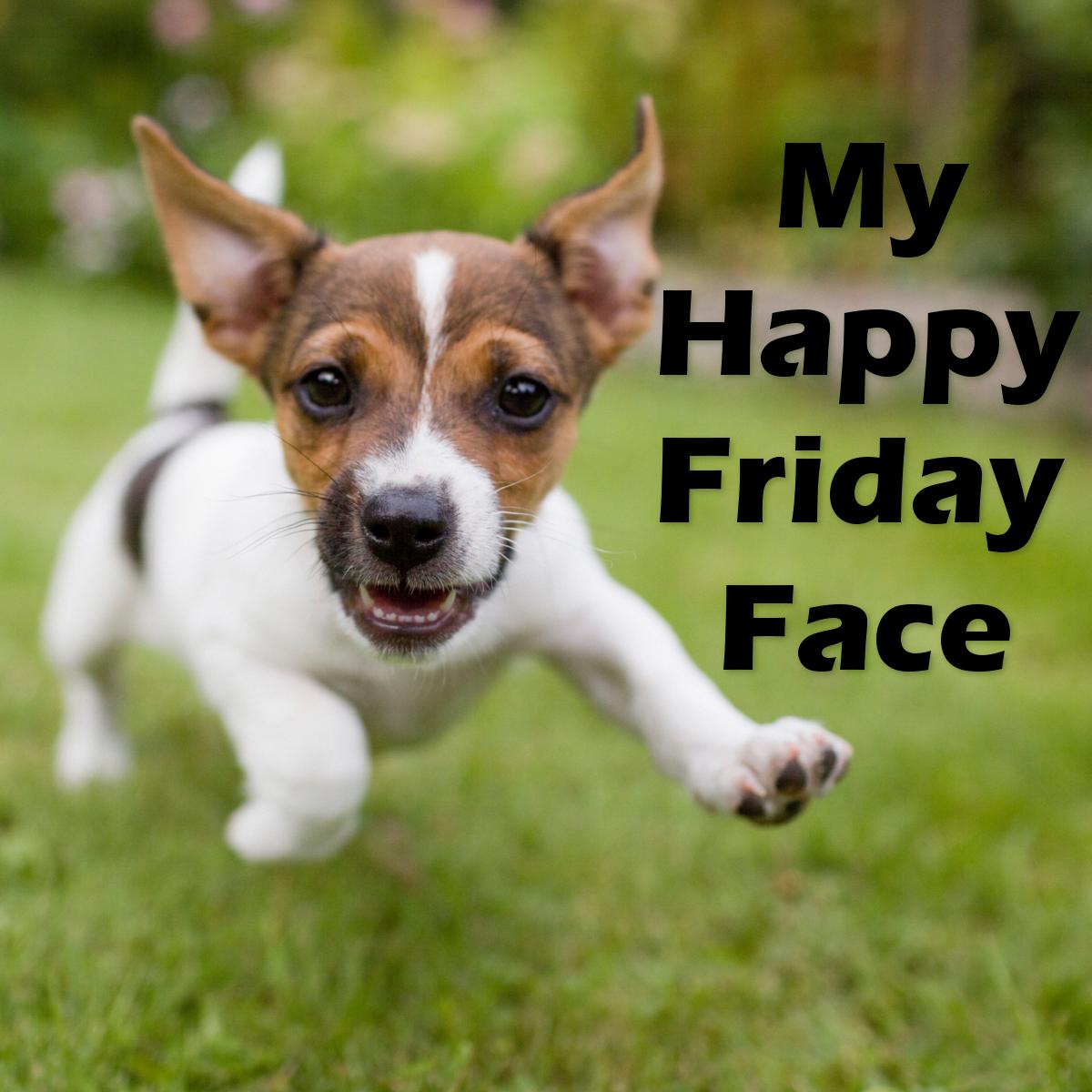 Happy Friday! TGIF Friday dog, Happy friday, Dog day