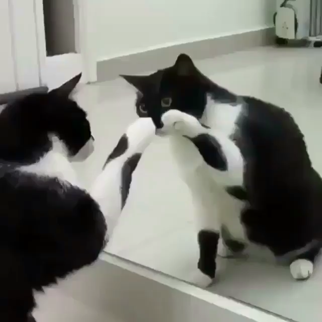 existential crisis Cute animals, Cute cats, Funny cats