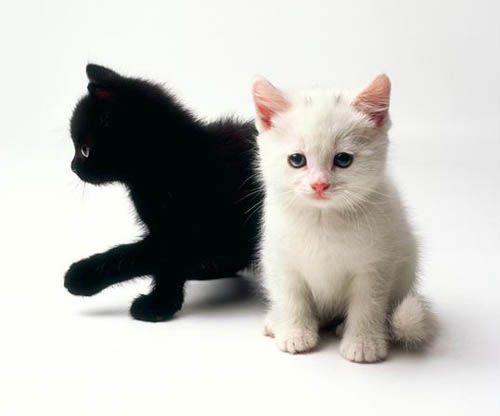 Black Kitten White Kitten Kittens Cutest Cute Animals Black