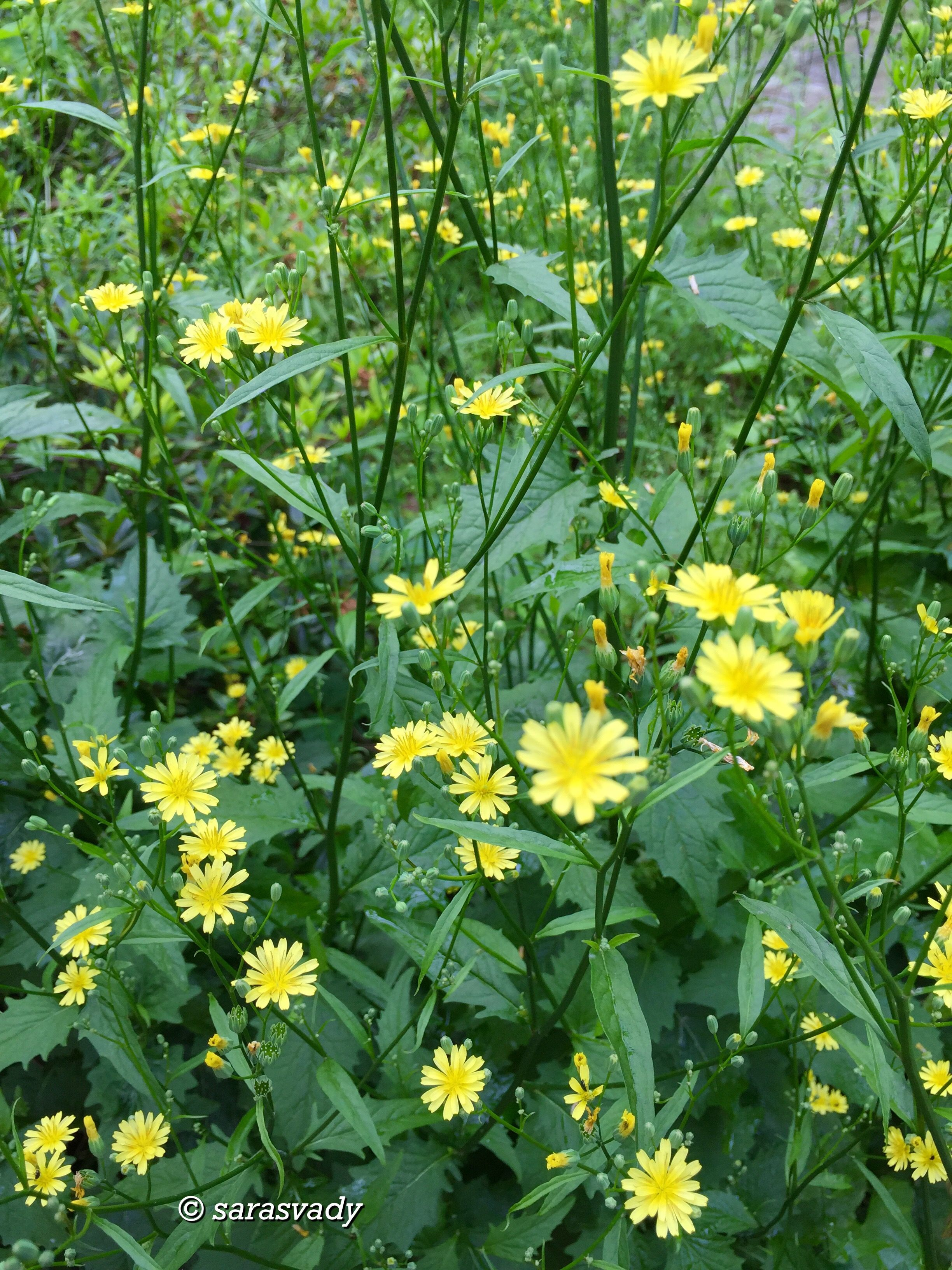 Pin By Sara Matos Mndez On Flores Hermosas Pinterest Yellow
