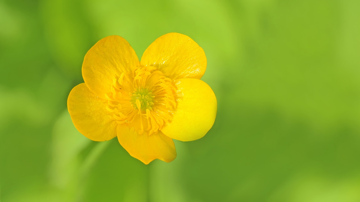 You Are A Child An Adult Picks A Tiny Yellow Cup Shaped Flower