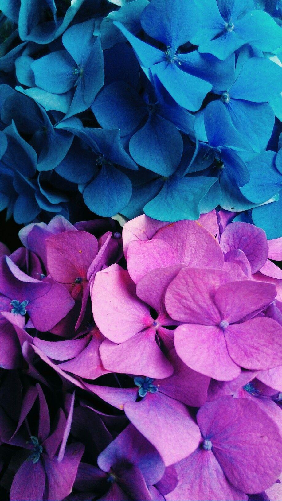 Blue And Purple Flowers Wallpaper Purple Flowers Wallpaper Beautiful Flowers Wallpapers Blue Flower Wallpaper