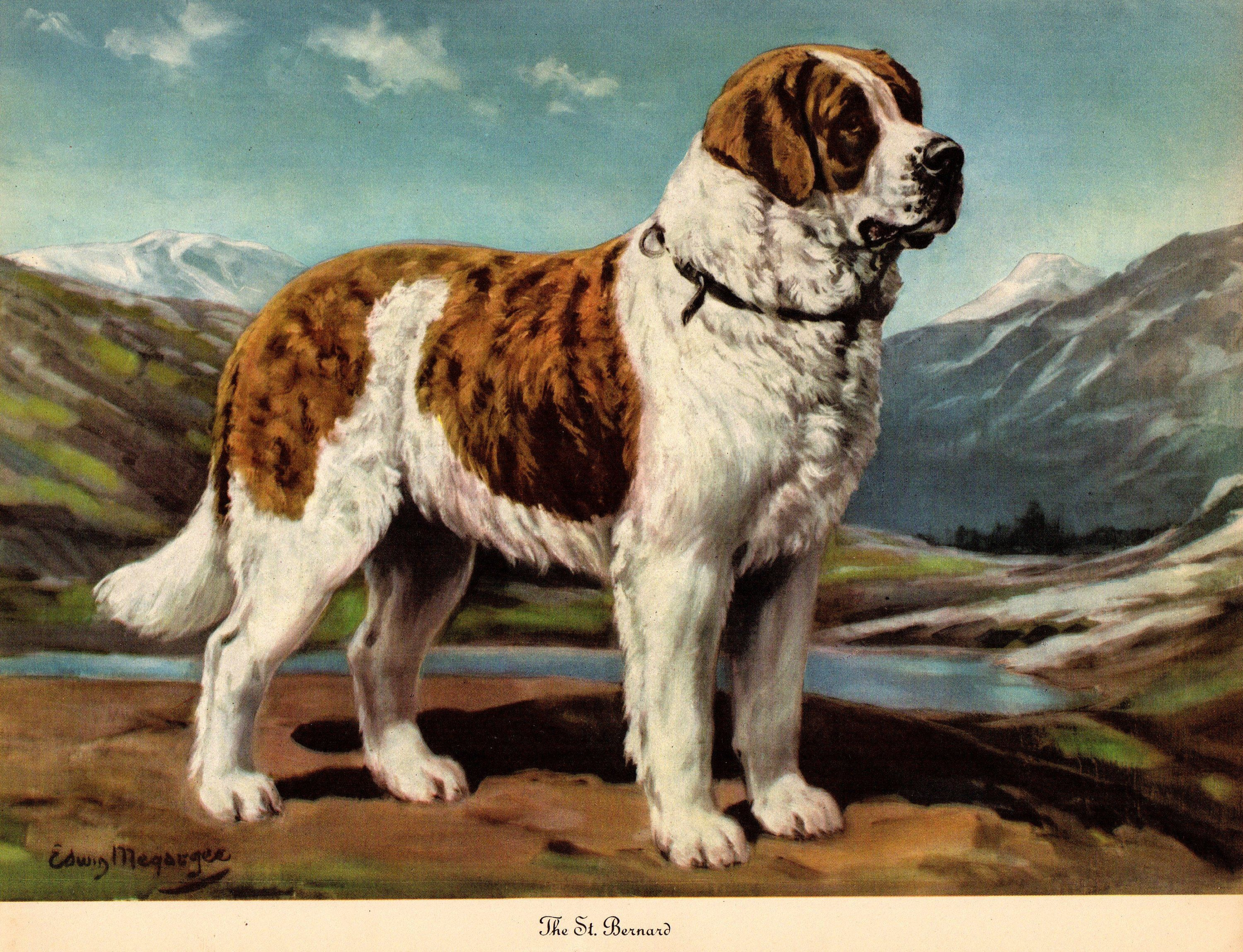 1942 Antique St Bernard Dog Print Vintage Megargee Pet Art Etsy Dog Print Art St Bernard Dogs Dog Art