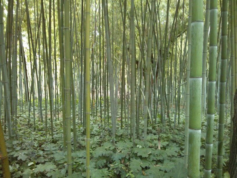 For t de bambous au jardin des plantes de montpellier le - Le jardin des plantes montpellier ...