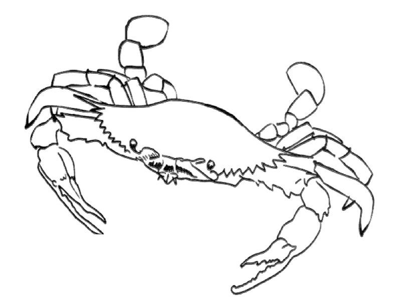 Hermit Crab Coloring Page | Maryland | Pinterest