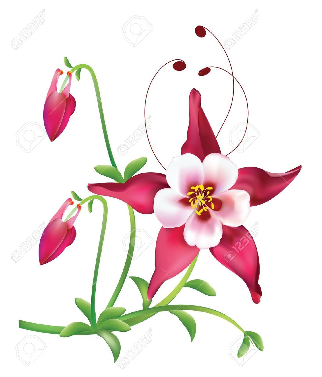 Red columbine flower royalty free cliparts vectors and stock red columbine flower royalty free cliparts vectors and stock dhlflorist Image collections