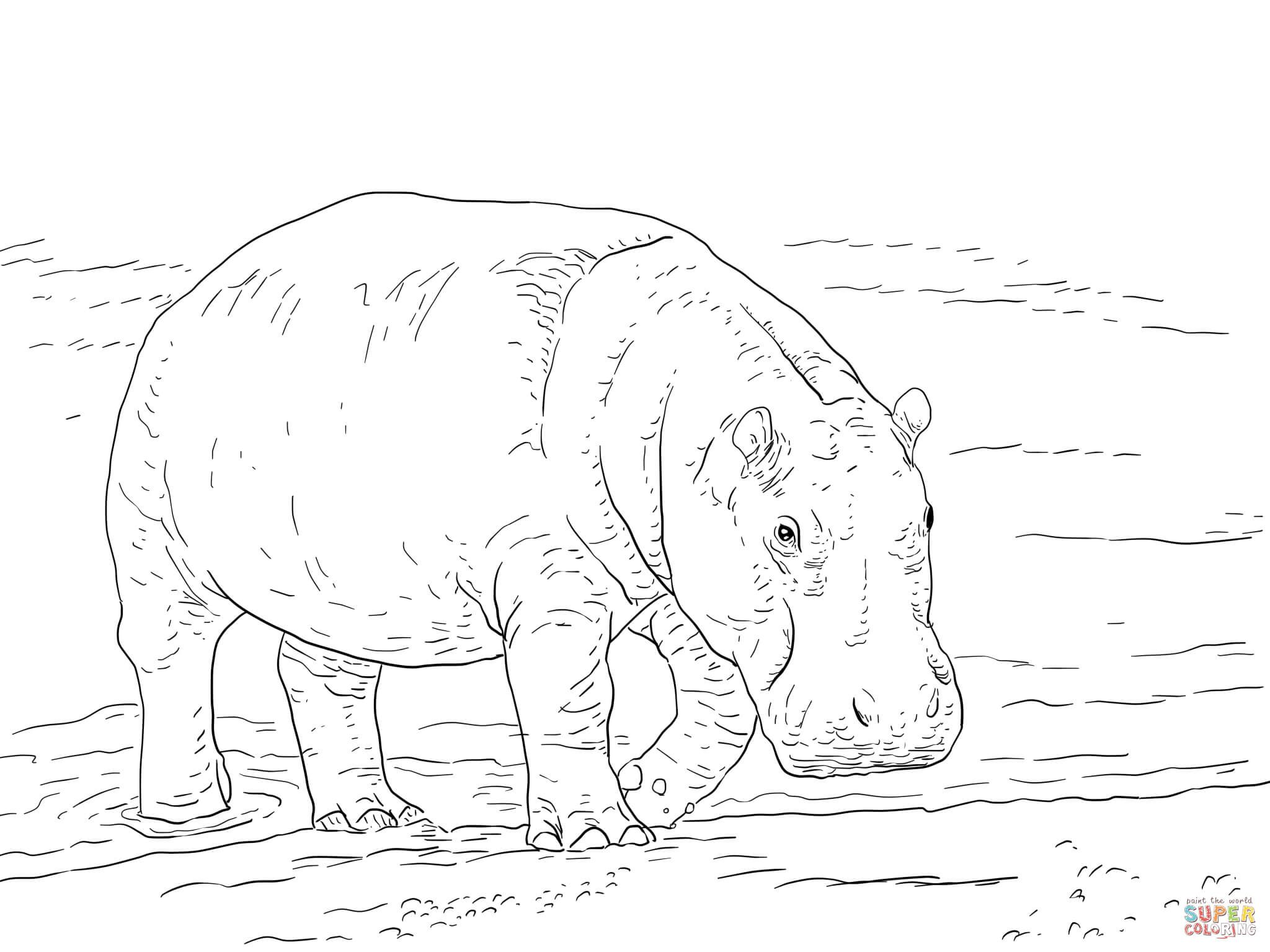 Hipopotamo Pigmeo Super Coloring Pygmy Hippopotamus Animal