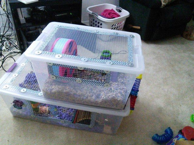 Connecting Two Diy Bin Cages For Dwarf Hamsters Hamster Bin Cage Hamster Cage Hamster Diy