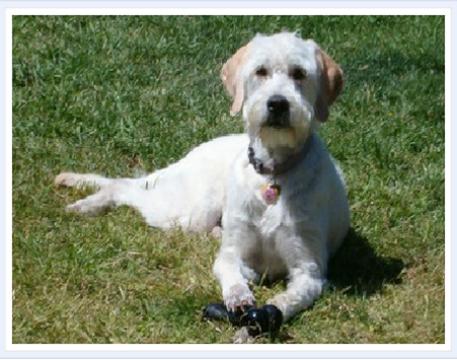 Tri City Veterinary Clinic Veterinary Specialty Hospital Pet