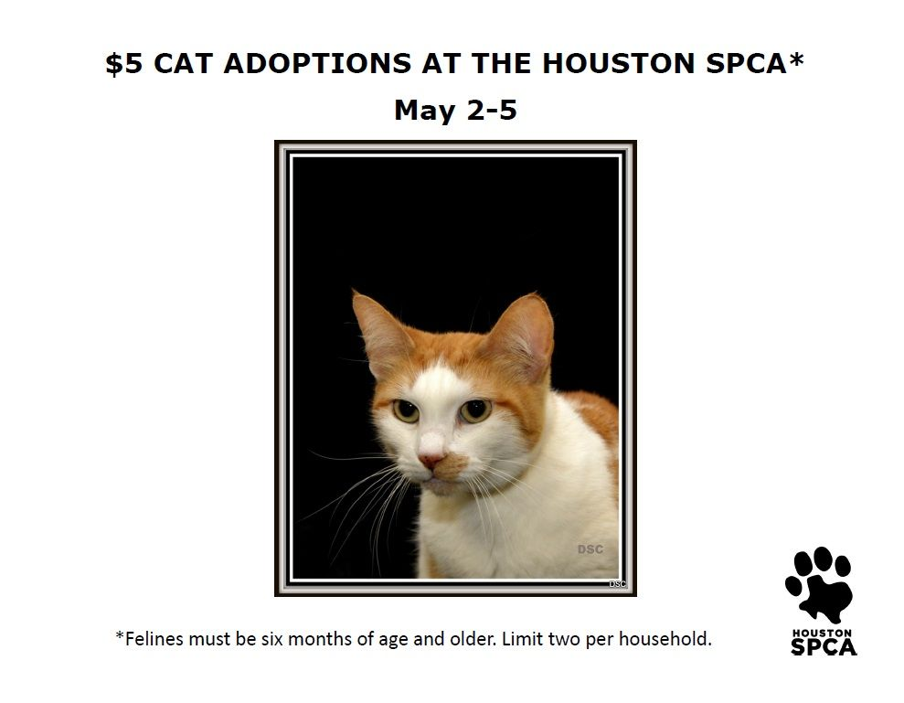 Meeooow Cats Six Months And Older Are Just 5 May 2 8 And You Can Adopt Up To Two Per Household Some Restricti Cat Adoption Animal Rescue Adoption Options