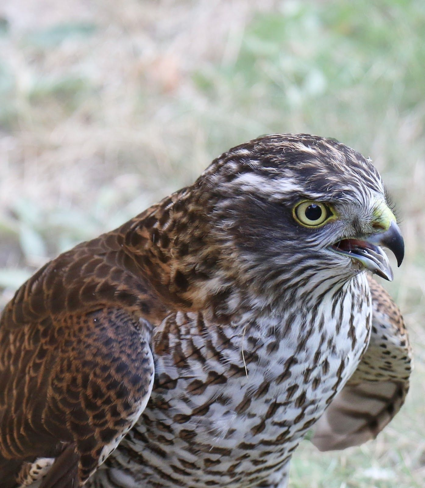 About Wild Animals 5 Amazing Qualities Flying Animals Have Birds Of Prey Animals Animals Wild