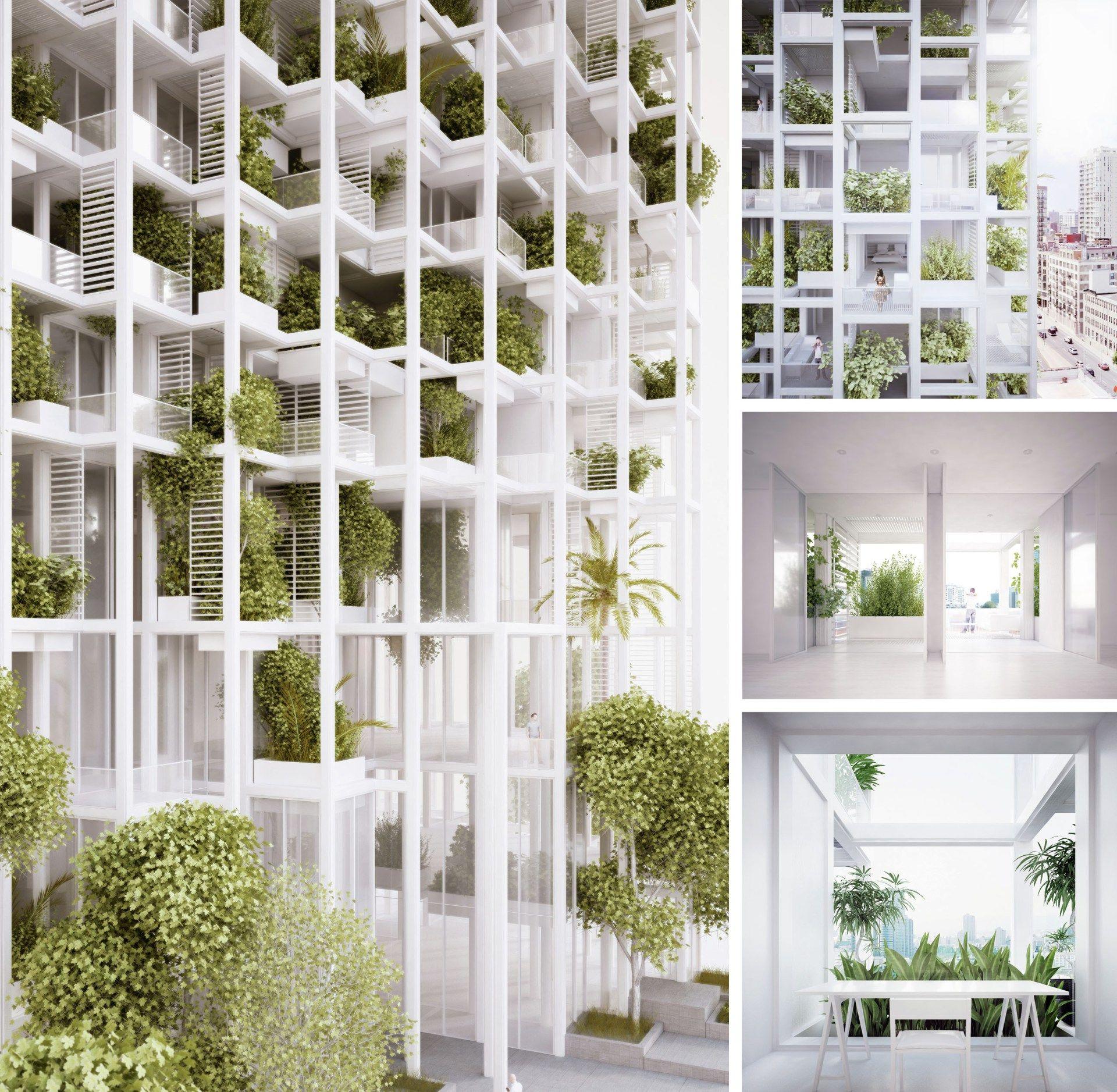 tree storey vegetação