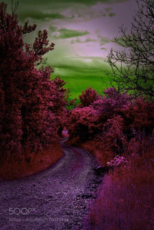 Mor rüyalar by arzukarabulut  köy huzur erzincan hayal aşk arzukarabulut mordünya bolcagezmeler bolcagulmeceler arzukarabulut