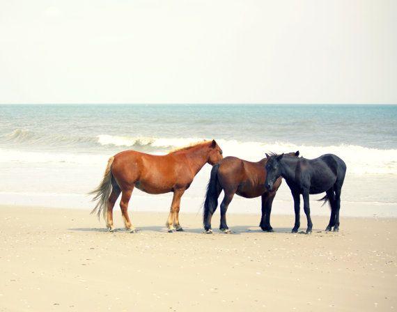 Horse Art Decor Photography Wild Horses Outer Banks Beach Equine Coastal House Prints Peace