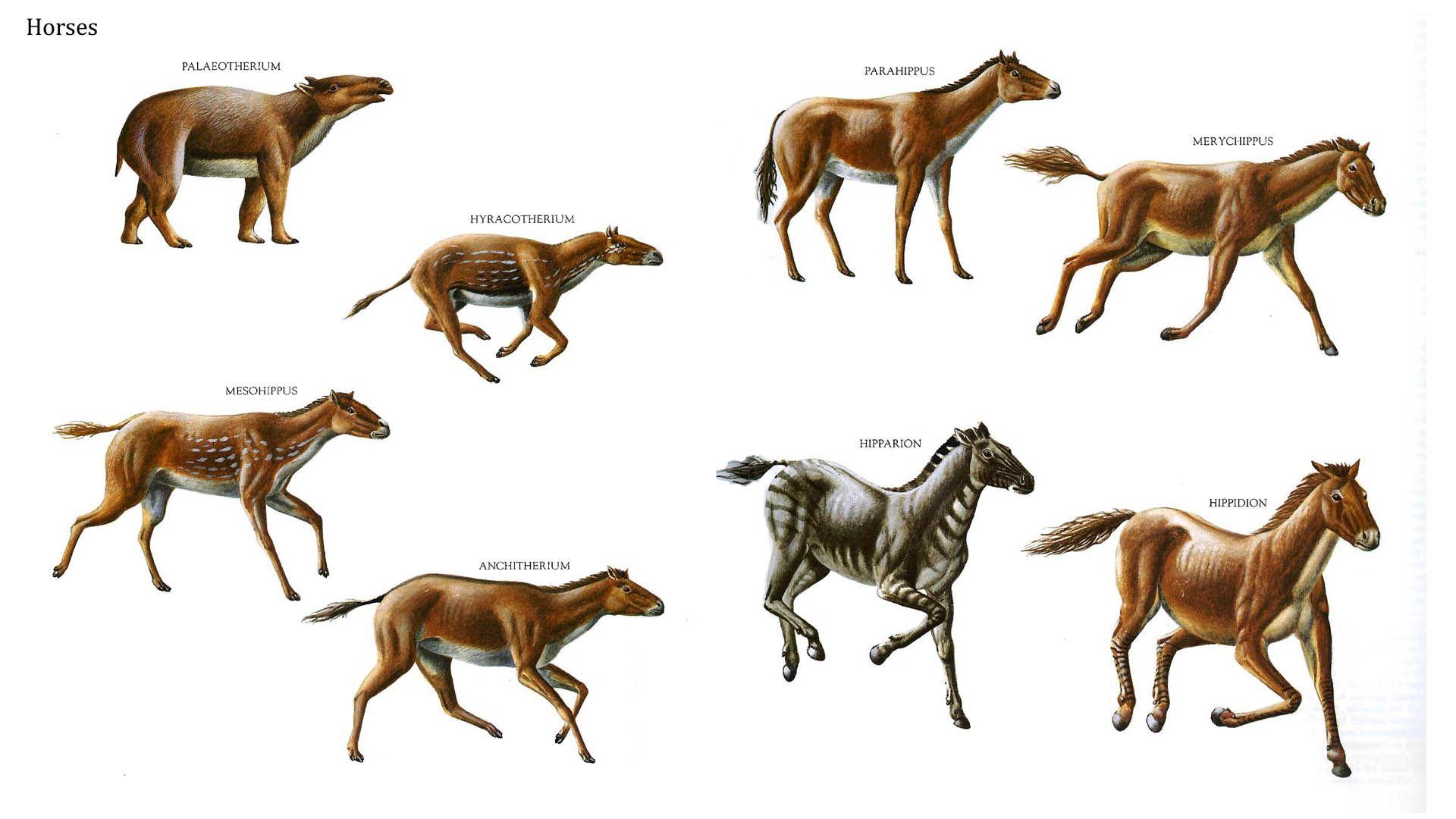 evolution of animals - HD1920×1080
