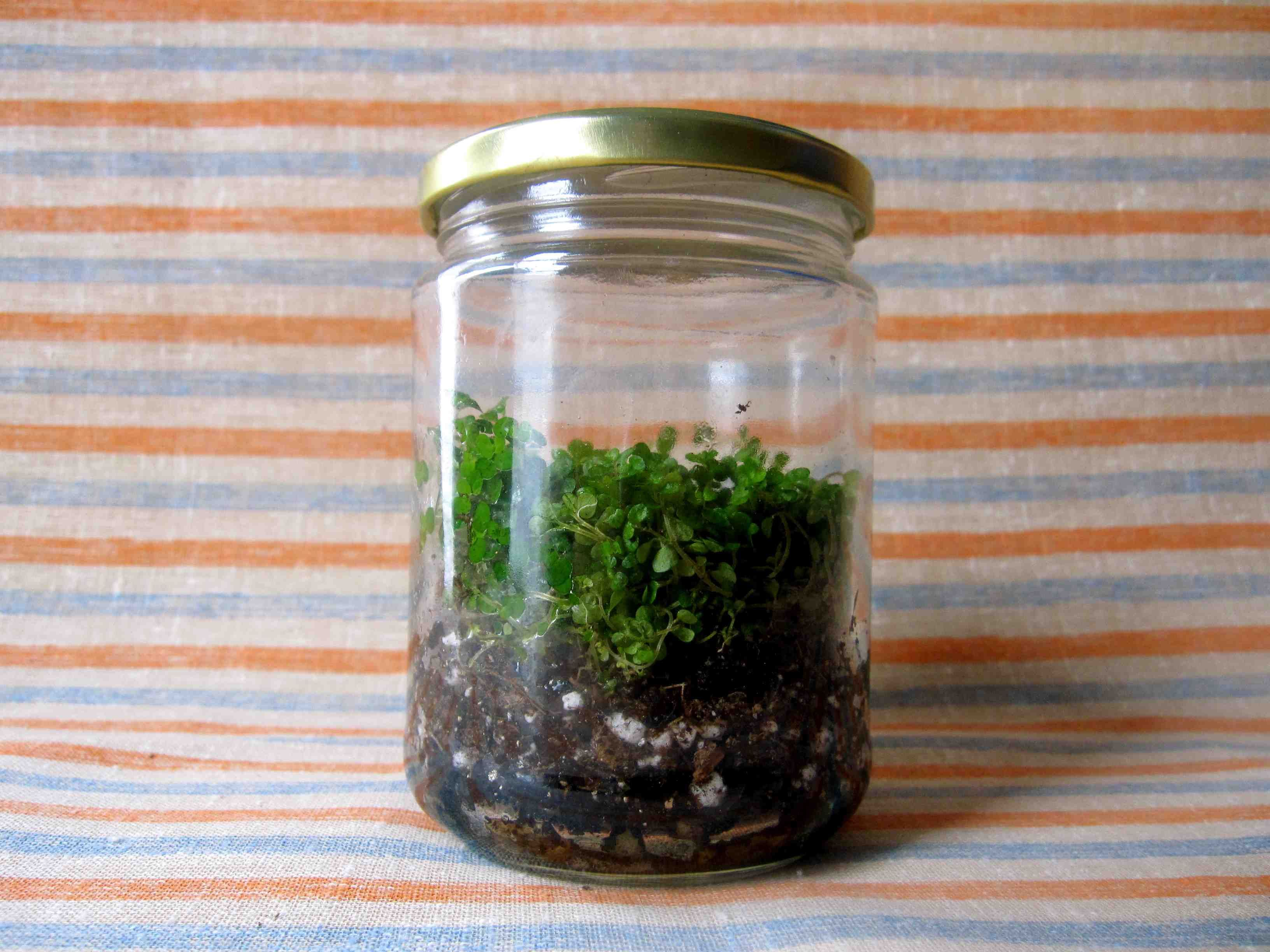 Daisy flower garden journey terrarium project for kids daisy
