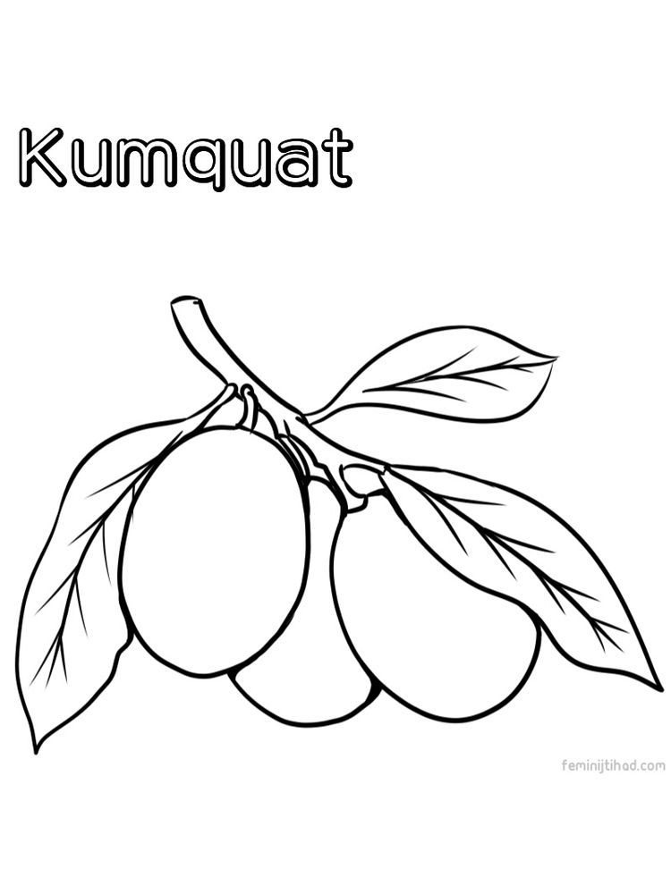 Kumquat Coloring Image Free This Orange Fruit Is One Type Of