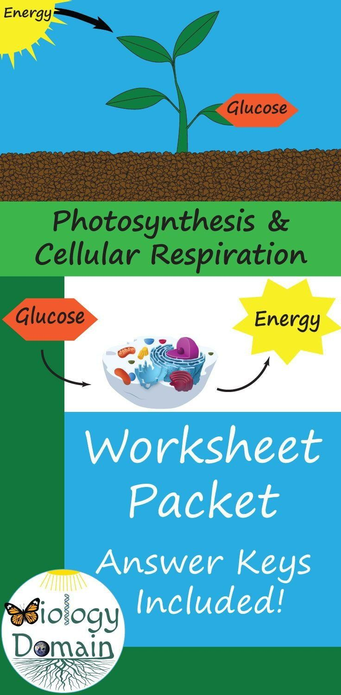 Card Sort Photosynthesis & Cellular Respiration Formulas