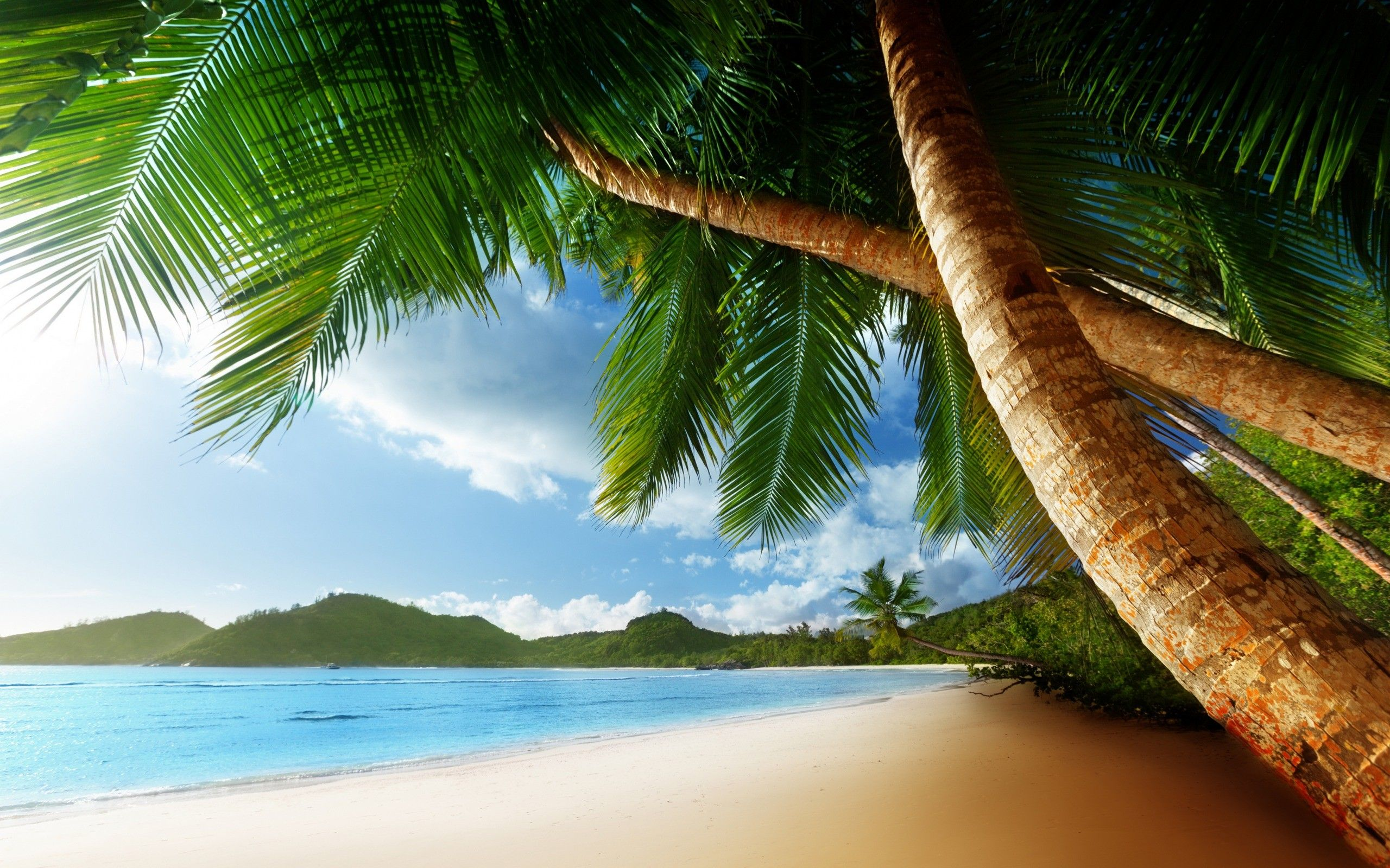 Painting Of Islands With Palms Tropical Palm Trees Beach Ocean Trees Wallpaper Background Beach Wall Murals Beach Wallpaper Palm Trees Wallpaper