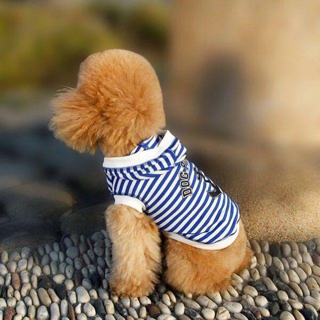 READY STOK idr 160k  Order via WhatsApp 087896532077 & LINE @wec7207p (pake @) #puppies #onlinepetshop #petshop #makanananjing #puppy #sofa #pawbulous #petshopindo #petshopjambi #petbed #dogfood #indodog #mainananjing #doglover #cute #anjinglucu #hamster #catbed #dogbed #aksesorisanjing #aksesoriskucing #talianjing #dogshirt #bajuanjing #dogclothing #tasanjing #pinchcollar #collar #topianjing #guntingkukuanjing by pawbulous_petshop #lacyandpaws