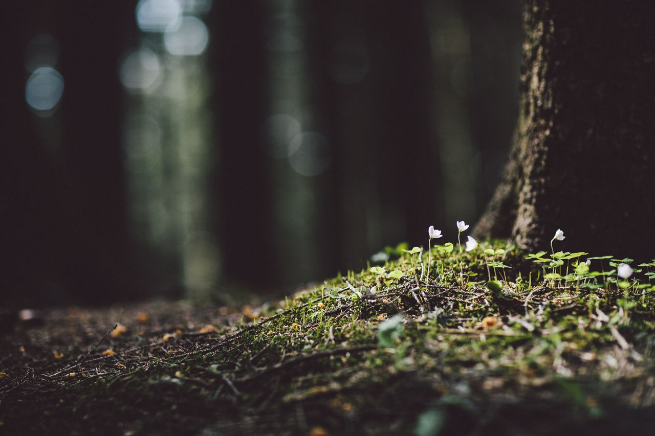 Wald Blumen