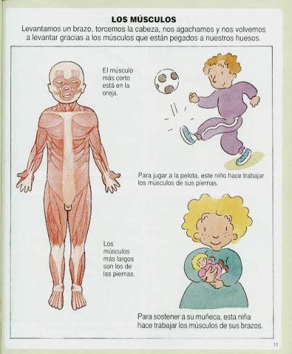 Resultado de imagen para dibujos para colorear musculos cuerpo ...