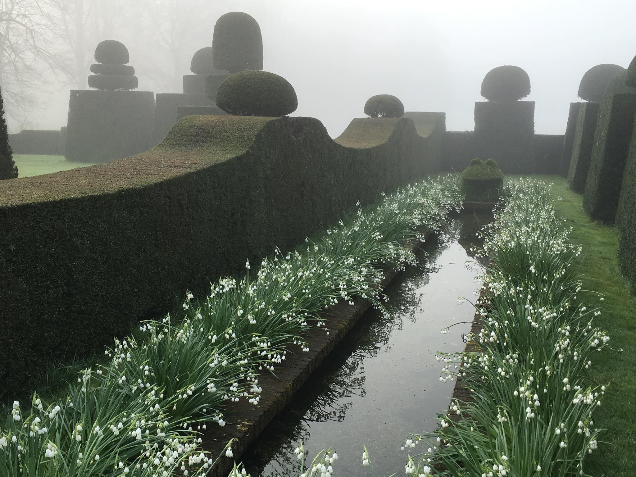 leucojum aestivum gravetye giant blooming at huis bingerden in the netherlands photography by - Garden Design By Carolyn Mullet