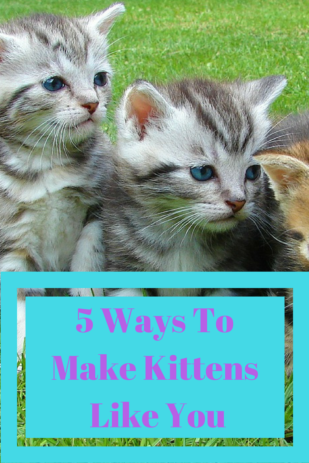 5 Ways To Make Kittens Like You