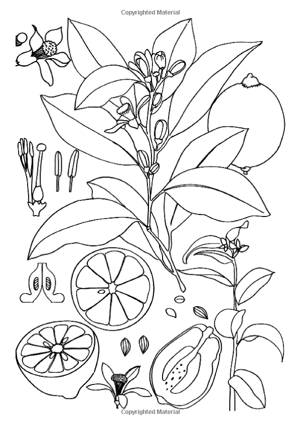 Art Therapy Extraordinary Gardens 100 Designs Colouring In And Relaxation Sophie Leblanc