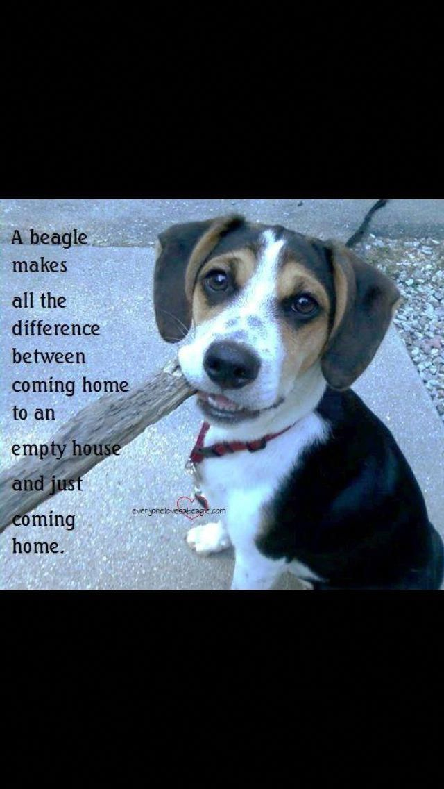 All About The Merry Beagle Dogs Grooming Beaglemasters