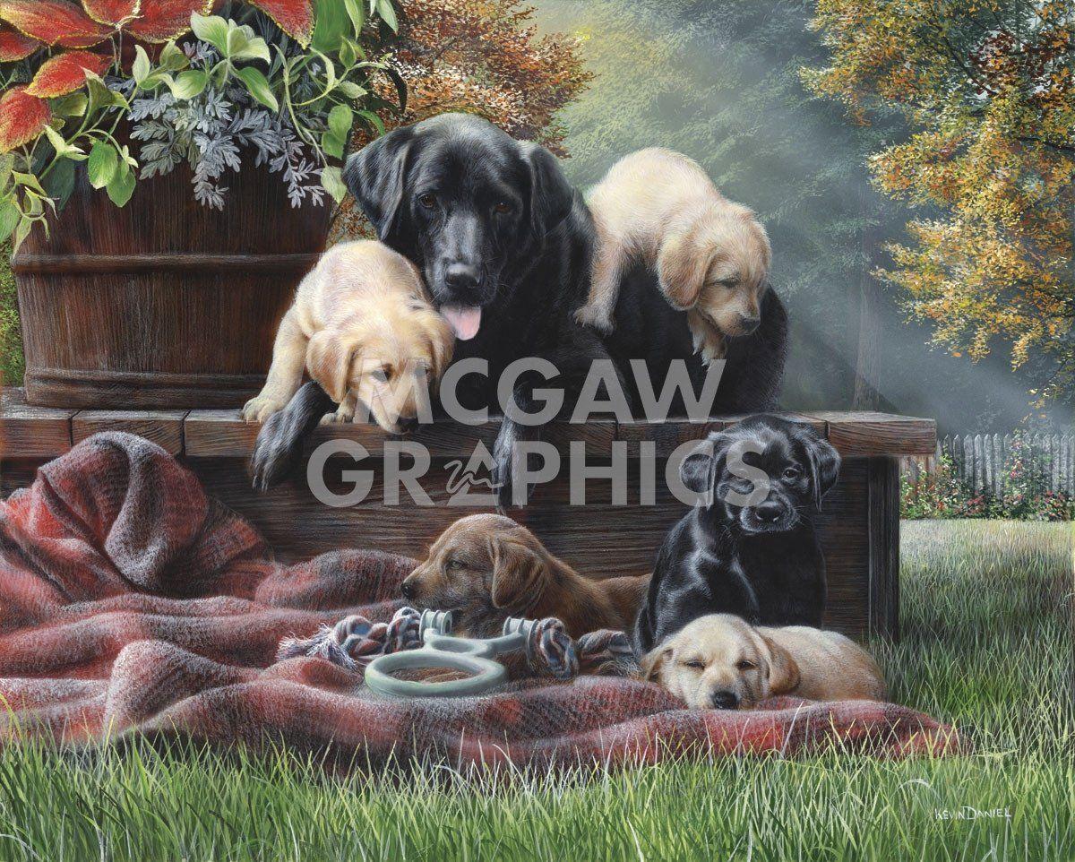 Cozy Moments in 10   Dog art, Labrador art, Animals