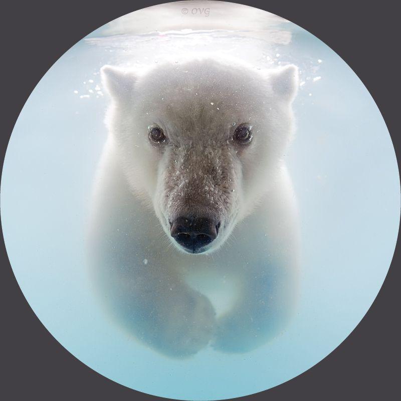 "500px / Photo ""A bear in the illuminator"" by Olga Gladysheva"