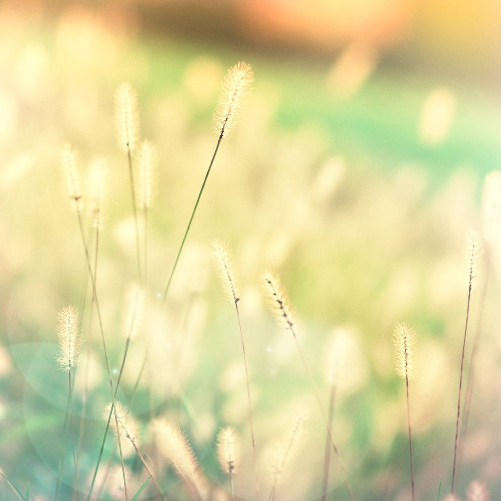 Summer grass photography, nature photo, home decor, teal and yellow golden sunlight meadow flower art 8x8 photograph. $30.00, via Etsy.