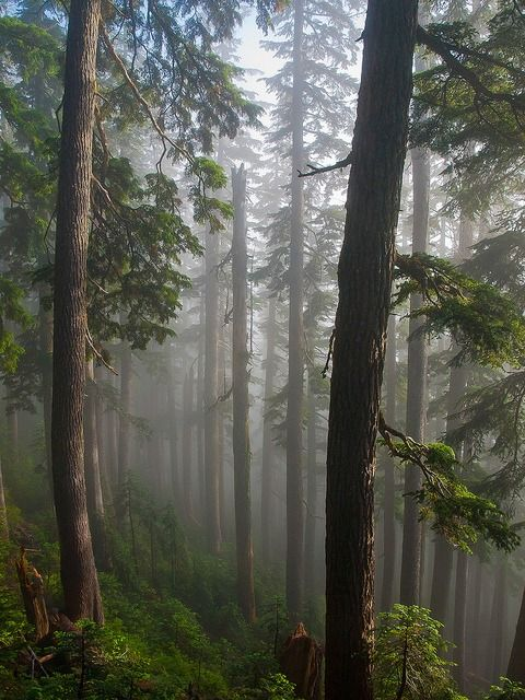 mist in the deep forest ~