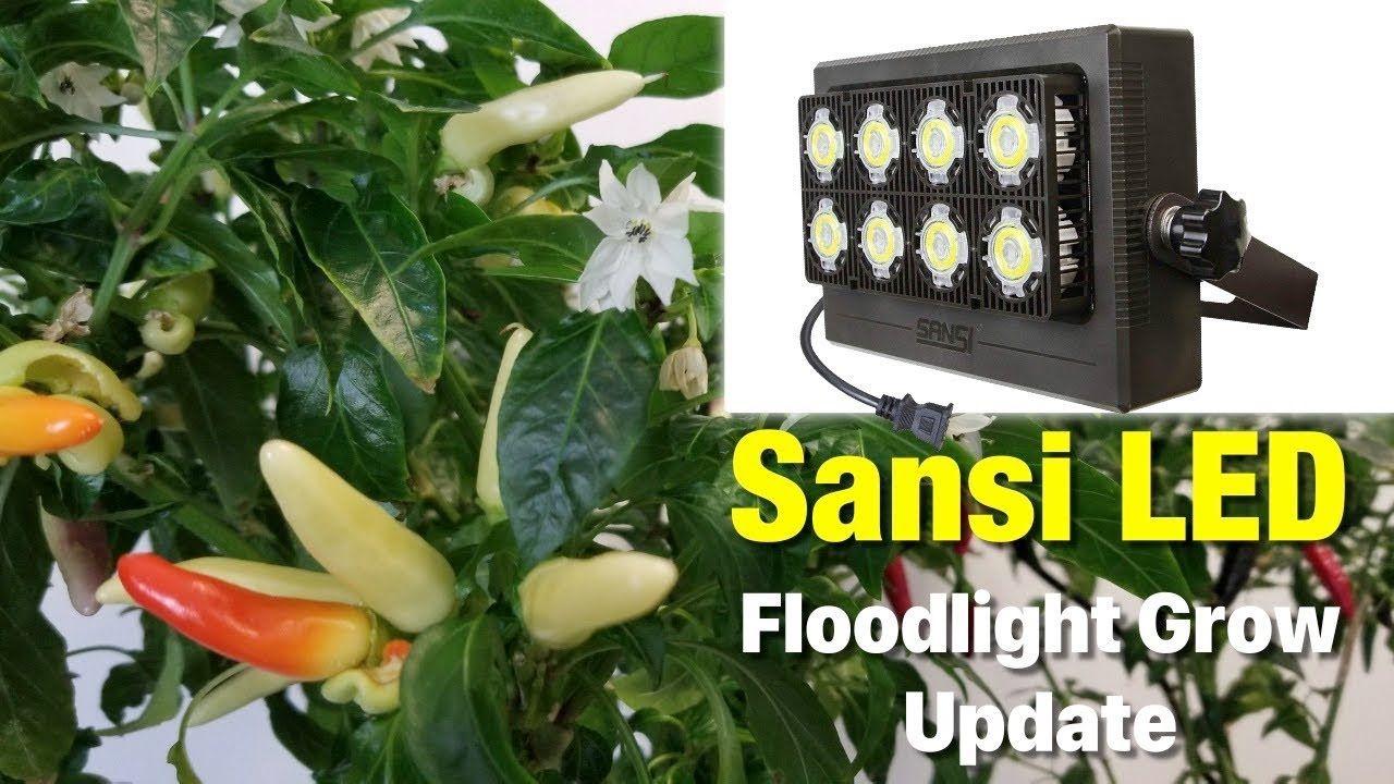 Sansi Led Floodlight Update 3 Indoor Pepper Grow 400 x 300