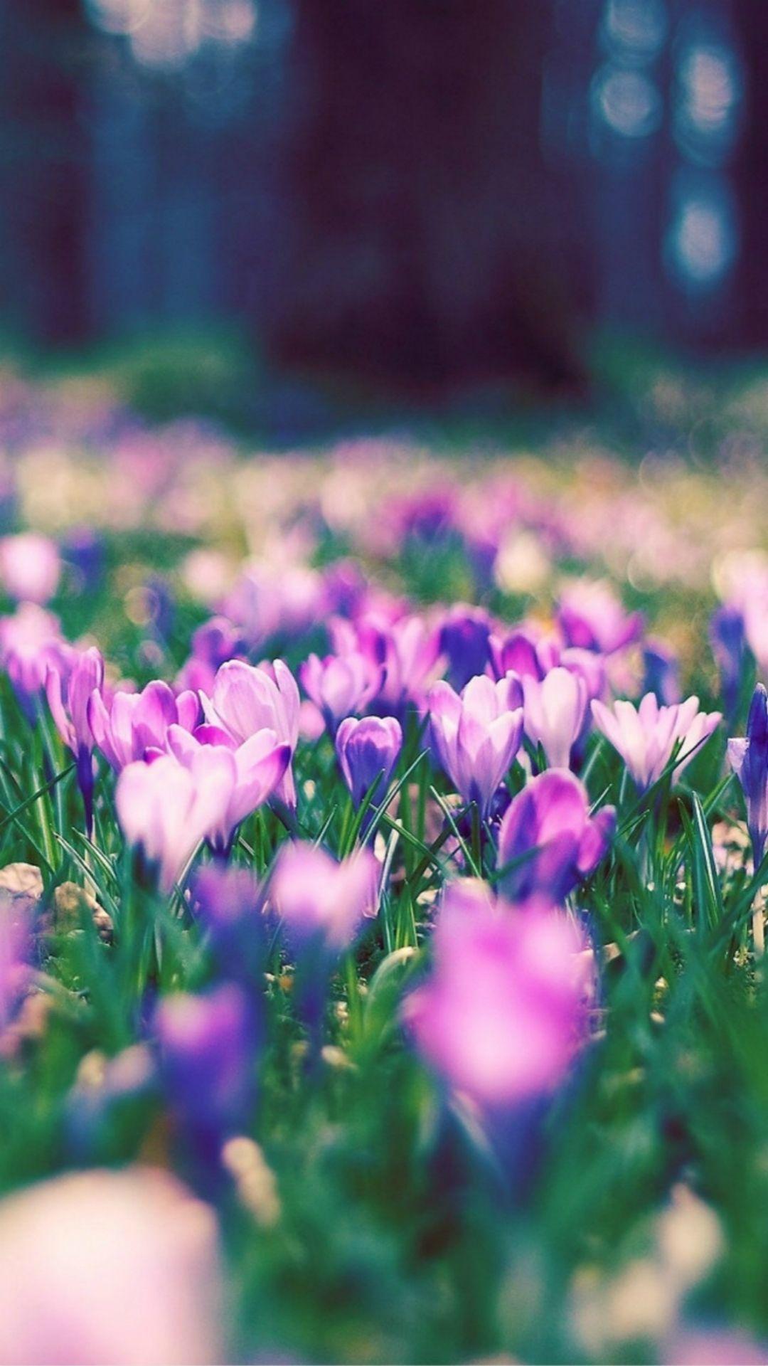 Nature Spring Purple Blossom Flower Garden Bokeh iPhone 6